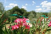 B&B with swimmingpool in tuscany
